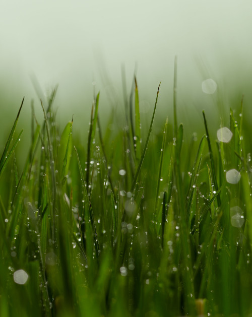 grass, fresh, green, water droplets, mist